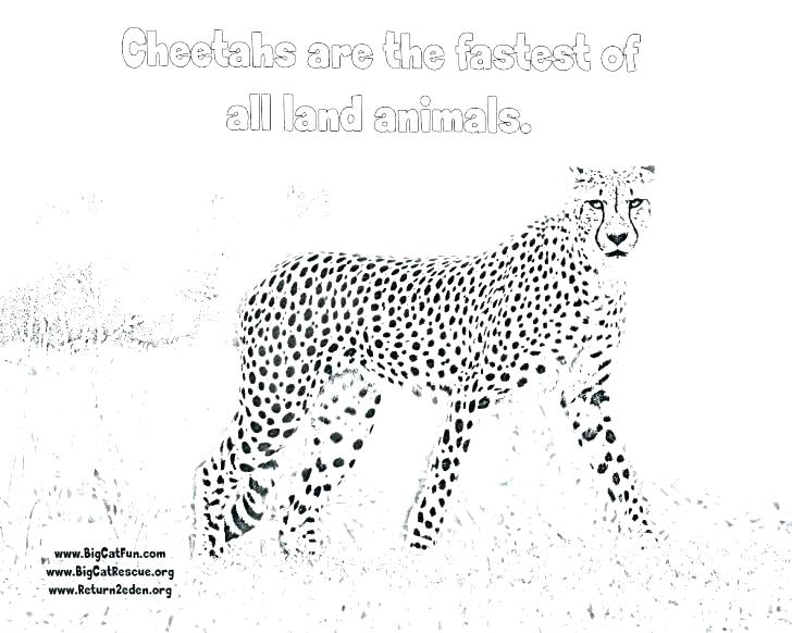 728x582 Cheetah Coloring Pages