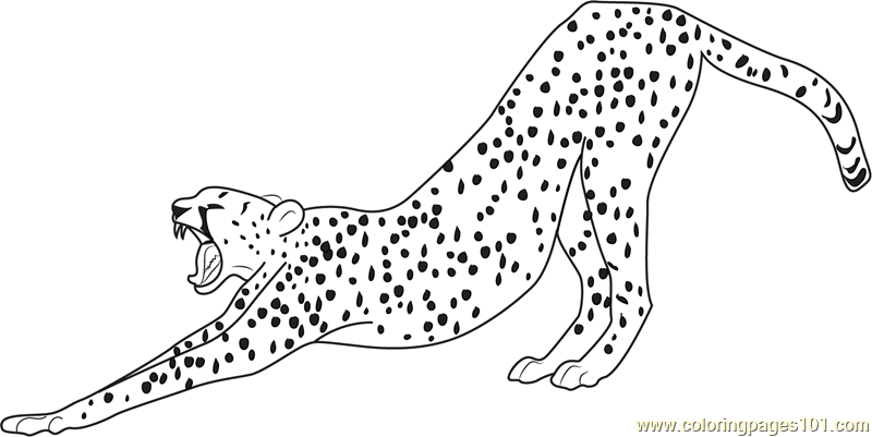 800x401 Cheetah Running Coloring Pages Cheetah Coloring Pages Printable