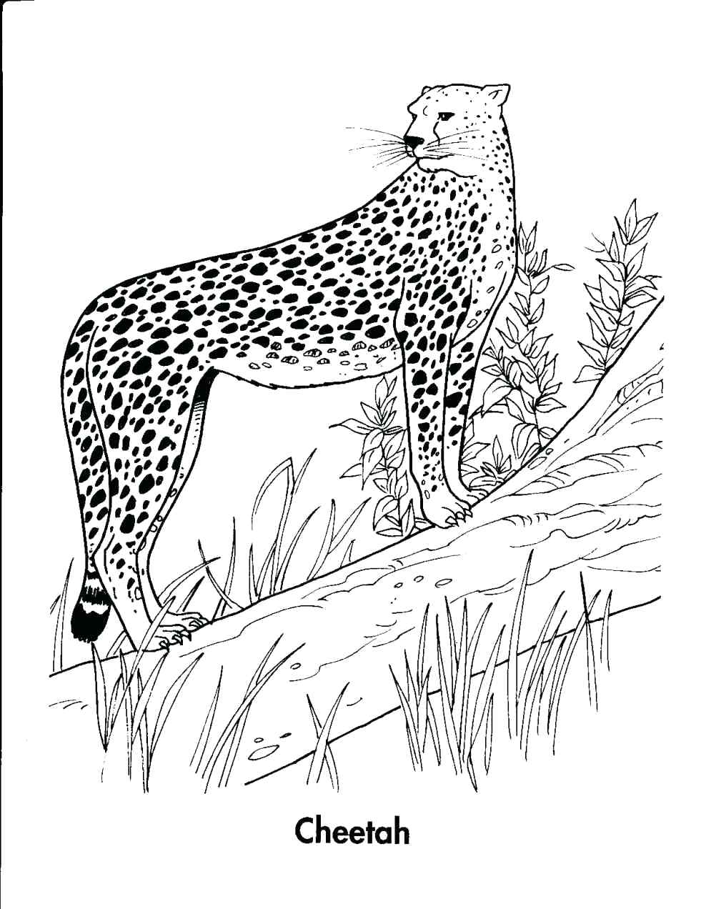 988x1272 Coloring Pages Cheetah Coloring Pages Head Page Save As Cute
