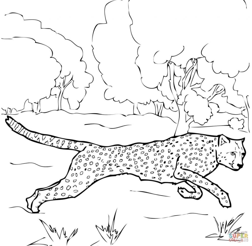 1024x999 Fresh Cheetah Running Coloring Pages Gallery Printable Coloring