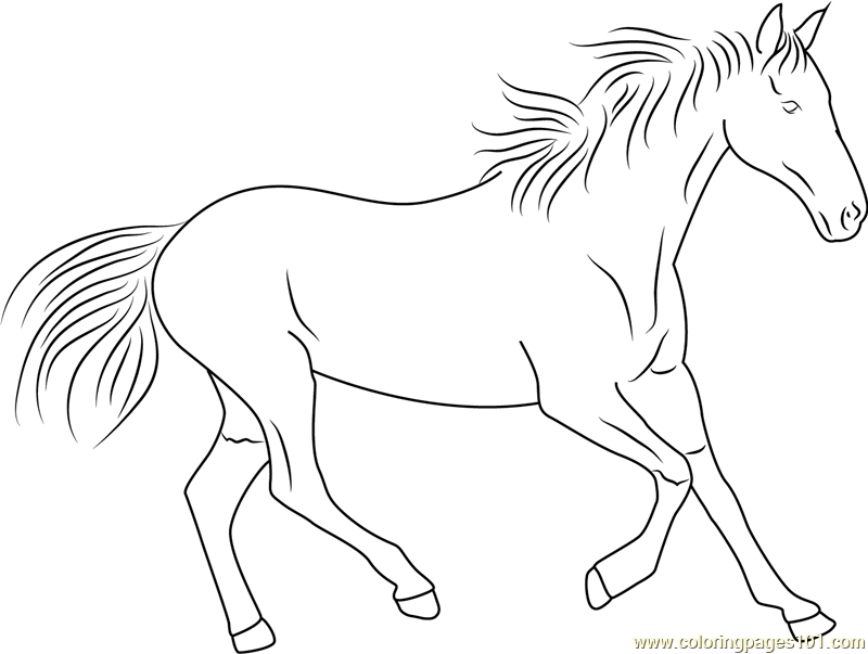 800x603 Horse Running Coloring Page