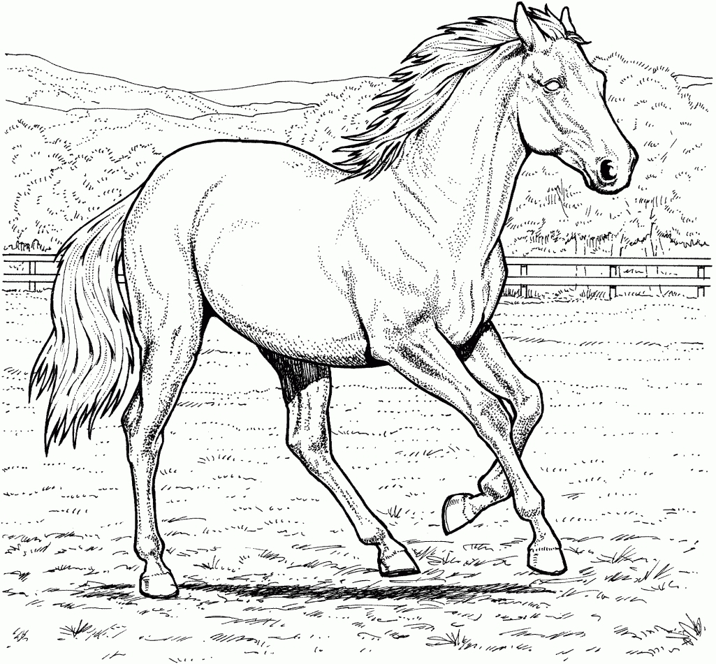 1025x951 Running Horse Coloring Pages To Print For Kids And Realistic