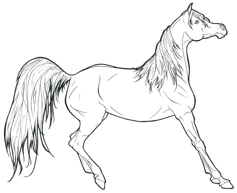 800x653 Running Horse Coloring Pages
