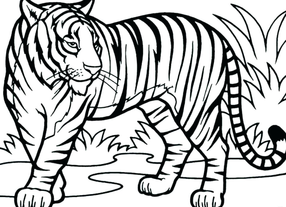 970x702 Sabre Tooth Tiger Coloring Page Free Saber Tooth Tiger Coloring