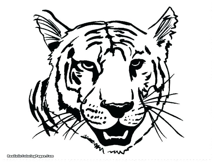 728x553 Tiger Template Outline Coloring Pages Tiger Template