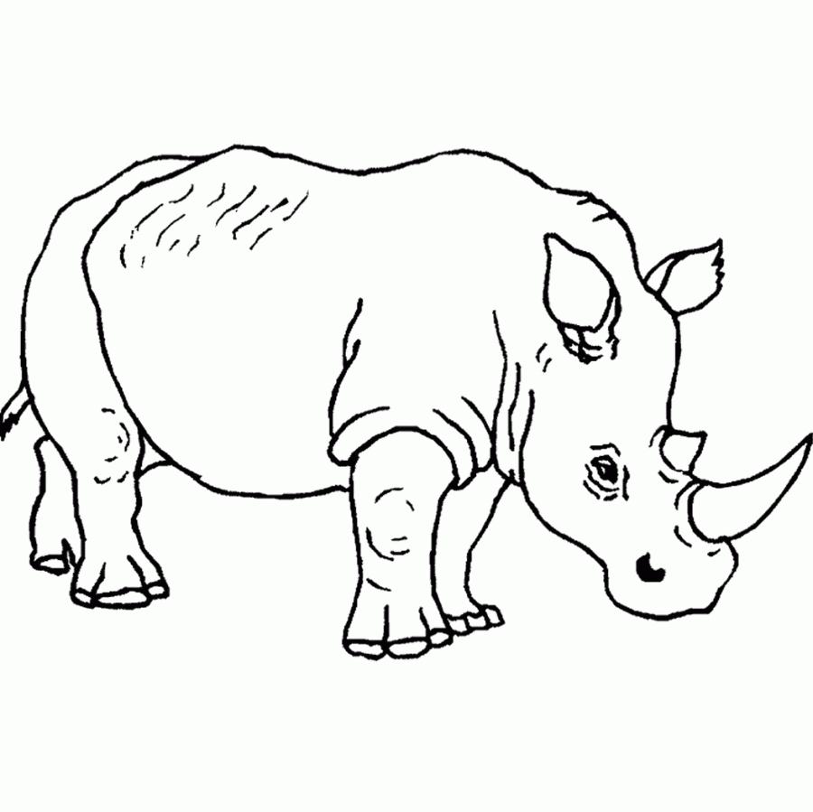 900x899 Cool Wild Animal Safari Coloring Pages Safari Animals Coloring