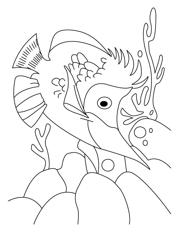 612x792 Salmon Coloring Page Salmon Coloring Page Salmon Coloring Pages
