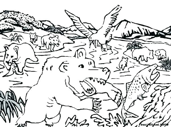 600x448 Salmon Coloring Pages Salmon Coloring Page Salmon Coloring Pages