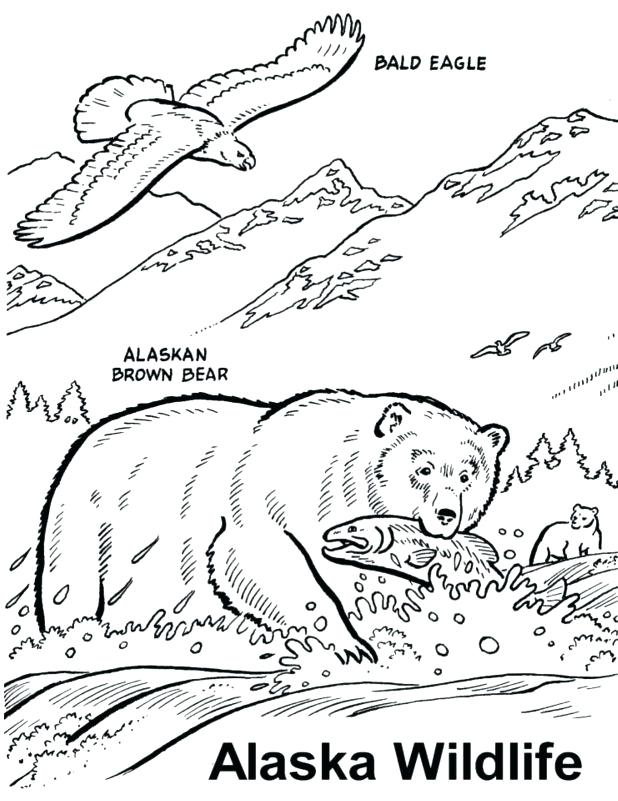 618x801 Salmon Coloring Template Sheets Pages Farmed Salmon Coloring Pages