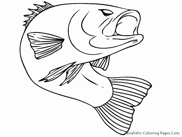 728x546 Chinook Salmon Coloring Page Collection Salmon Coloring Pages