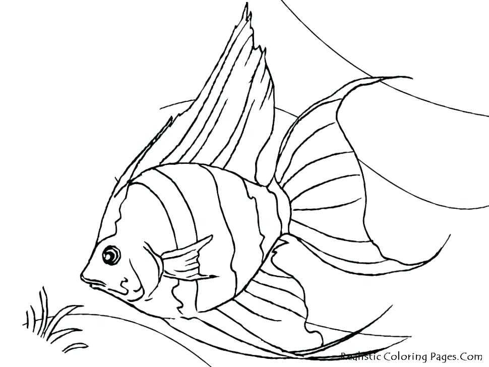 970x728 Realistic Fish Coloring Pages Fish Realistic Saltwater Fish