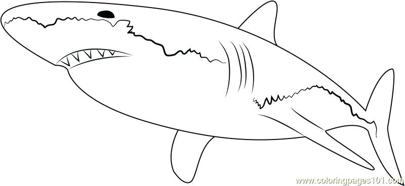 800x368 Sharks Coloring Pages Free Printable Shark Tale Coloring Pages
