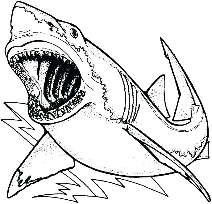 687x660 Sharks Coloring Pages Great White Shark Colouring Page Tiger