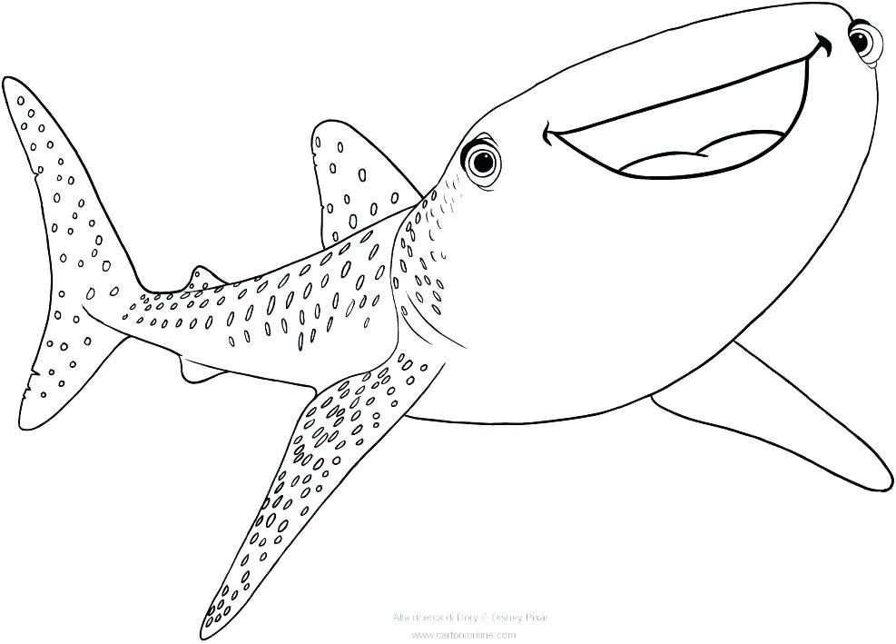 987x709 Sharks Coloring Pages Shark Pictures To Color And Print Destiny
