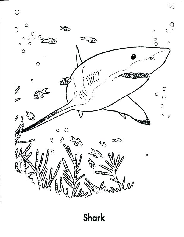 618x796 Sharks Coloring Whale Shark Coloring Page Gallery Coloring Pages