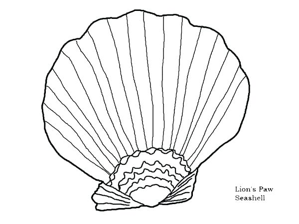 600x450 Sea Shell Coloring Pages Seashell Shell Clip Art Black And White