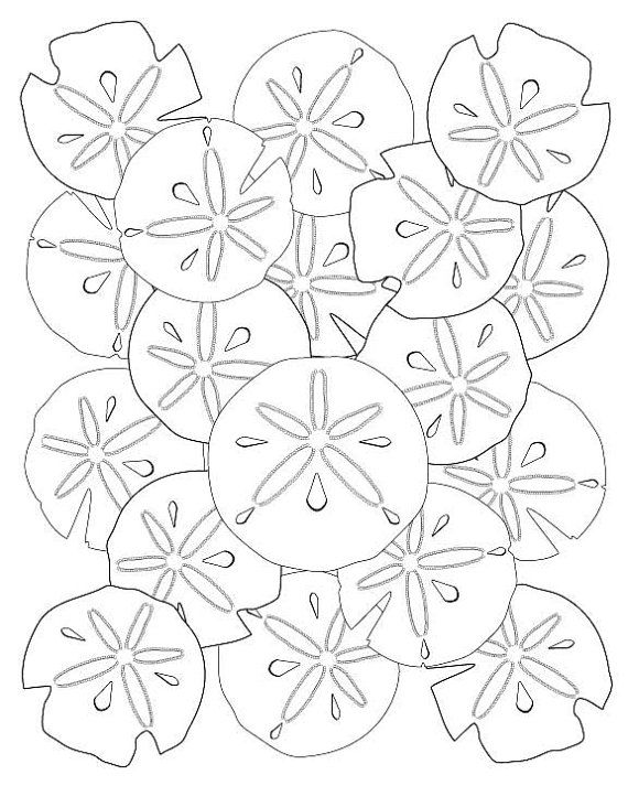 570x713 Soothing Sand Dollar Adult Coloring Page