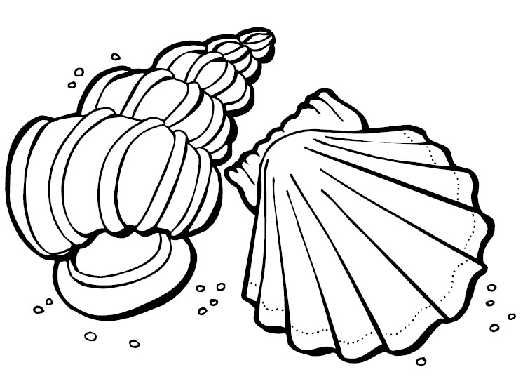 746x550 Best Photos Of Sea Shells Coloring Page Printable