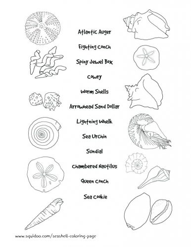 386x500 Coloring Pages Seashell Coloring Pages Seashell Coloring Pages