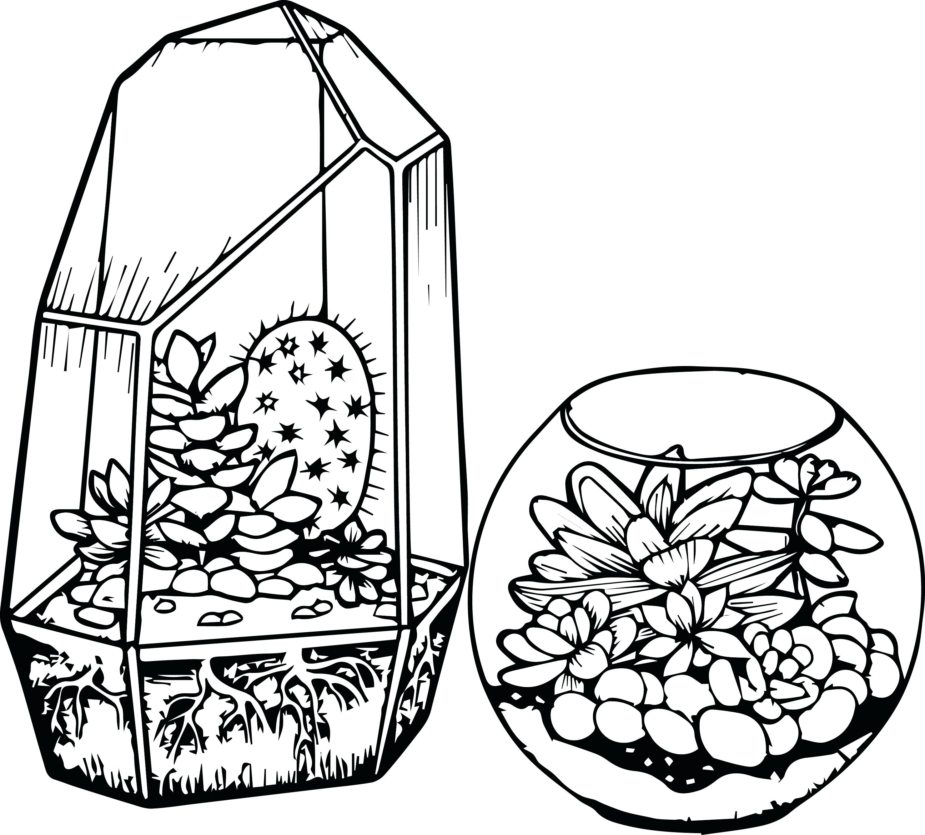 2959x2669 Cactus Coloring Page Astrophytum Asterias Or Sand Dollar Free