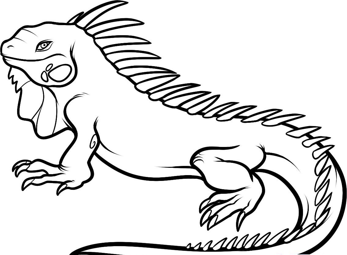 1135x833 Free Printable Iguana Coloring Pages For Kids