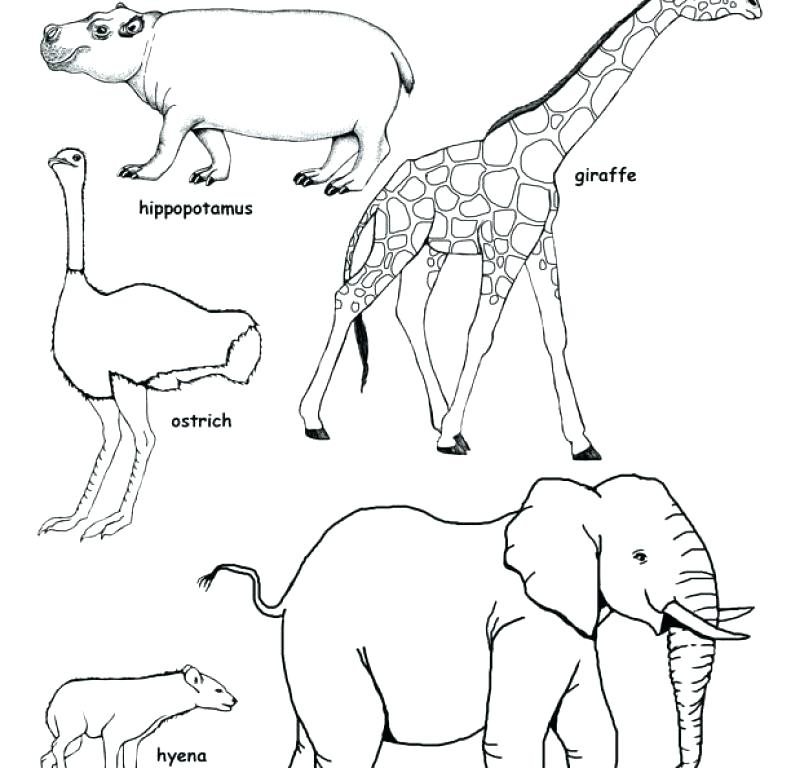 791x768 African Animals Coloring Pages Fox Coloring Page Free African