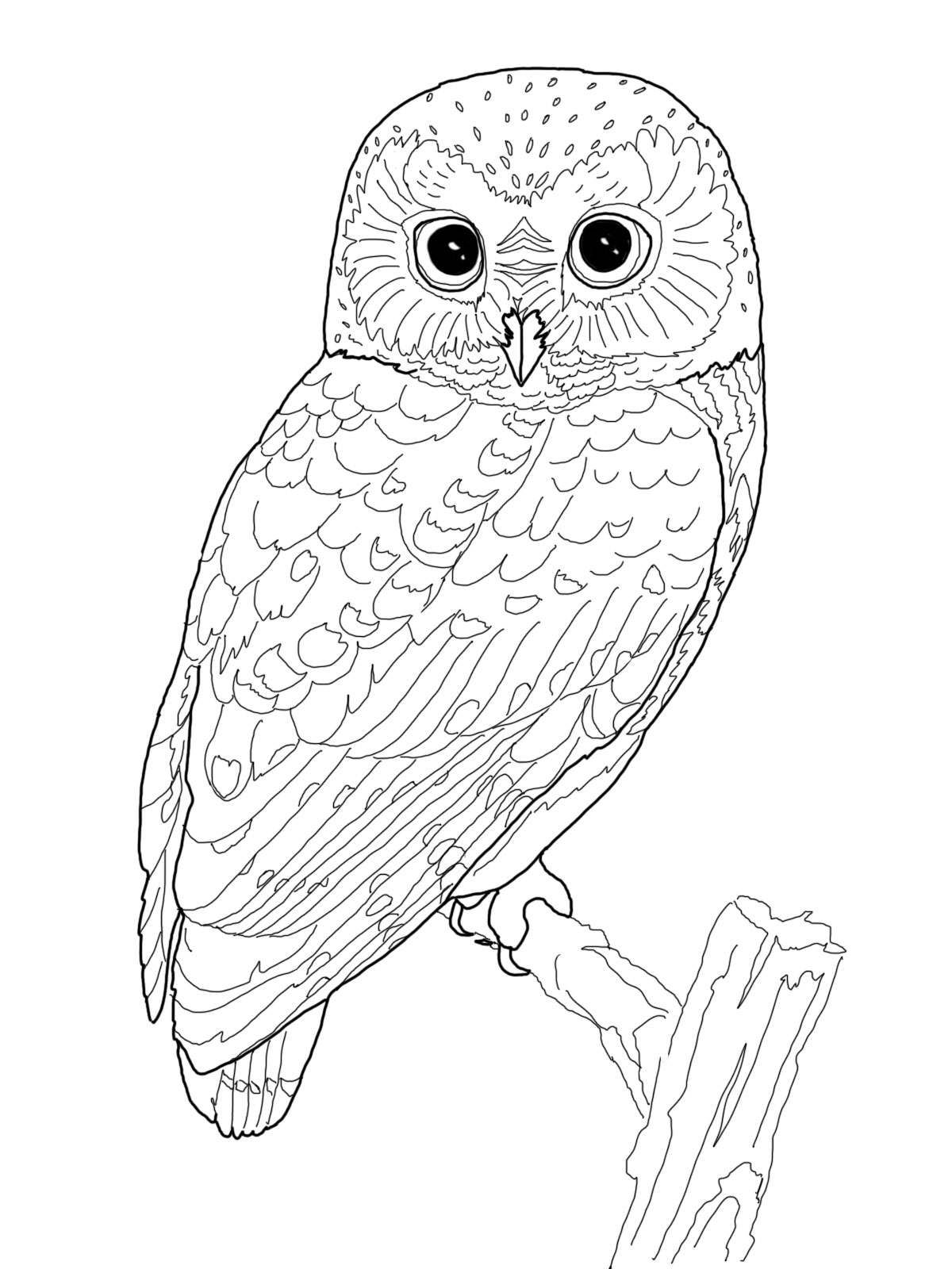 1200x1600 Realistic Owl Coloring Pages These Are Some Owl Coloring Pages