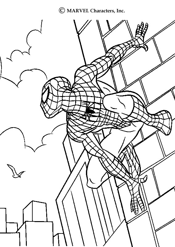 568x802 Color This Spiderman Drawing This Spiderman Scales Walls Coloring