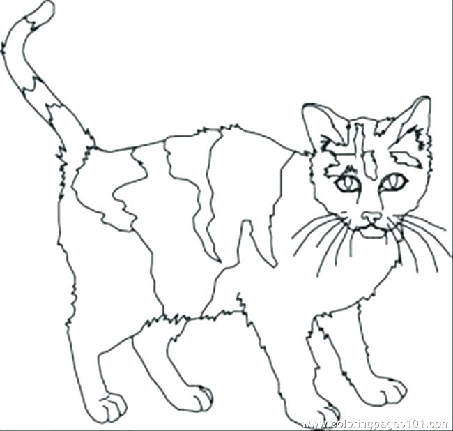 650x618 Black Cat Coloring Pages Black Cat Coloring Scared Cat Cartoon