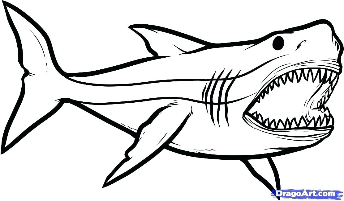 1112x652 Tiger Shark Coloring Page Shark To Color Drawn Shark Coloring Page