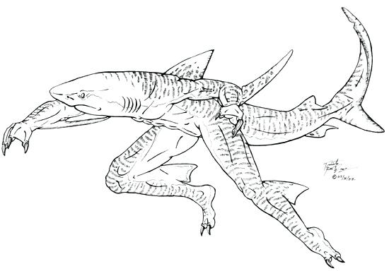 550x384 Tiger Shark Coloring Page Tiger Shark Blacknd White Sco Home