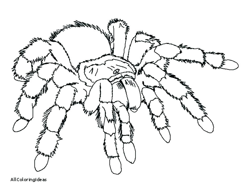 Scary Spider Coloring Pages at GetDrawings | Free download
