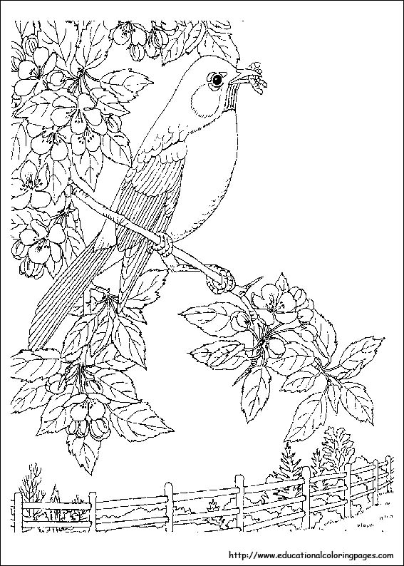 567x794 Nature Coloring Pages Coloring Pages For Adults Nature