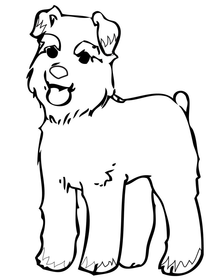 736x952 Miniature Schnauzer Coloring Pages Printable Coloring Pages