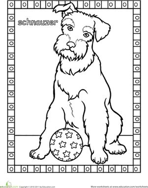 301x381 Schnauzer Coloring Page Animals First For Schnauzer Coloring Page