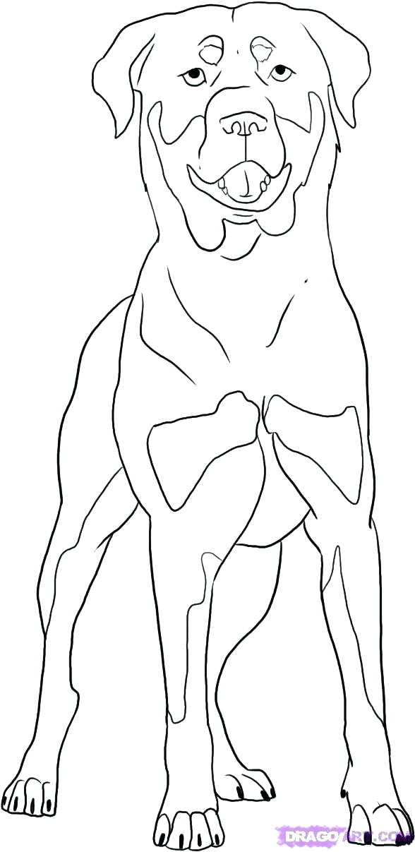 Schnauzer Coloring Page At Getdrawings Com Free For Personal Use
