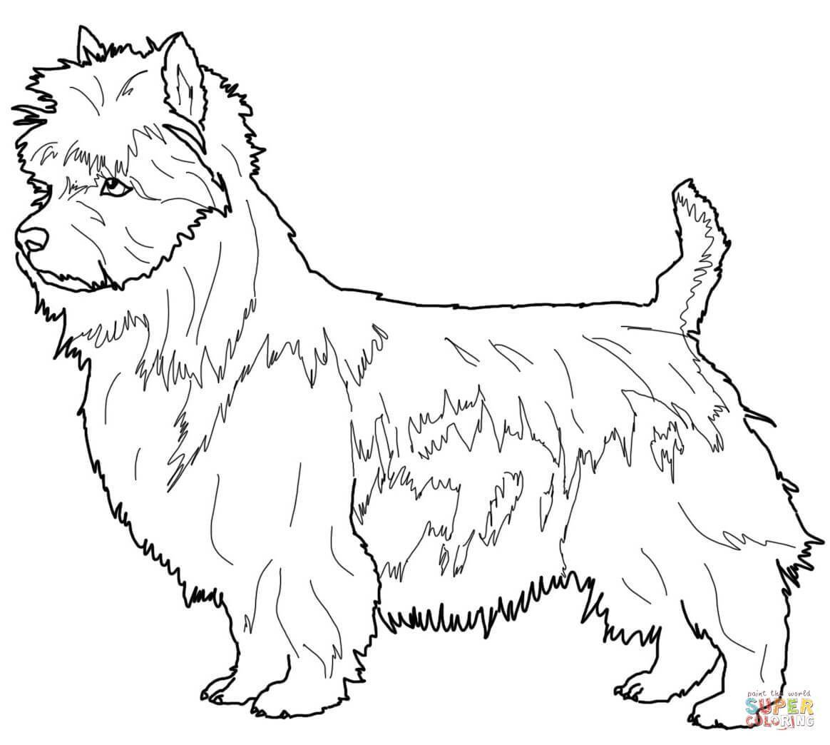 1164x1044 Schnauzer Coloring Pages