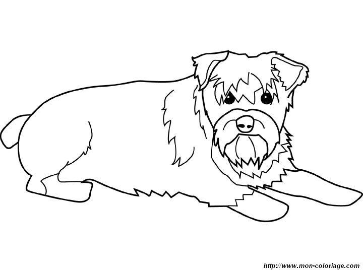 720x540 Schnauzer Coloring Pages To Print