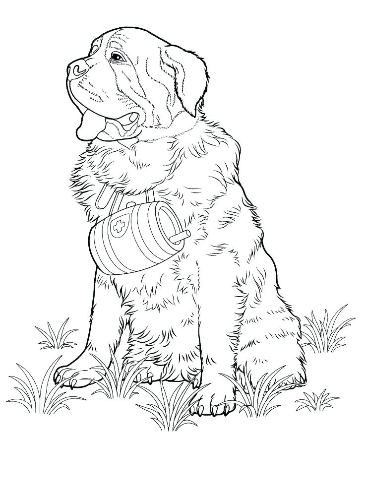 736x1010 Dog Breeds Coloring Pages Fuhrer Von