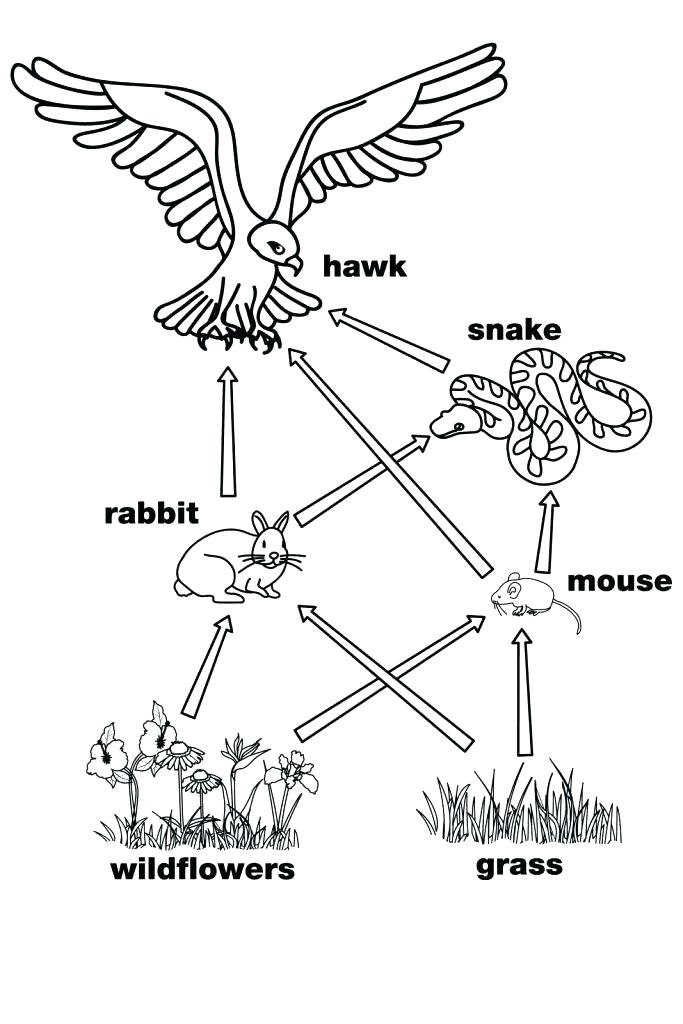 683x1024 Food Web Coloring Pages Food Chain Coloring Pages Food Chain