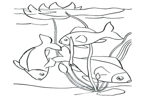 476x333 Pond Coloring Page Pond Coloring Pages Preschool Happy Fish Swim