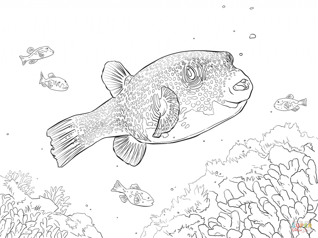 1024x768 Puffer Fish Coloring Page Colouring Pages Color Excellent