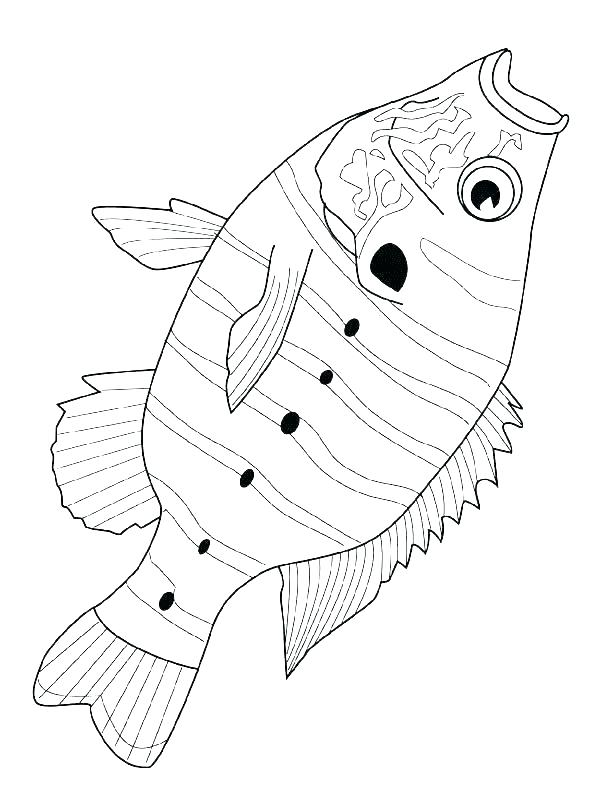 600x800 School Of Fish Coloring Pages Loaves And Fishes Coloring Page Five
