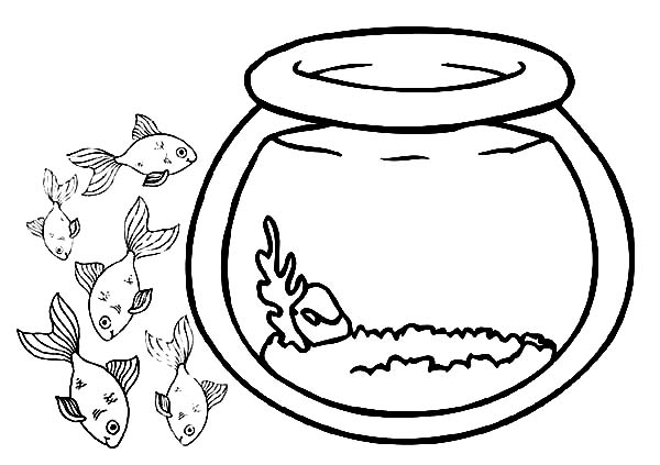 600x423 School Of Fish Outside Fish Bowl Coloring Page