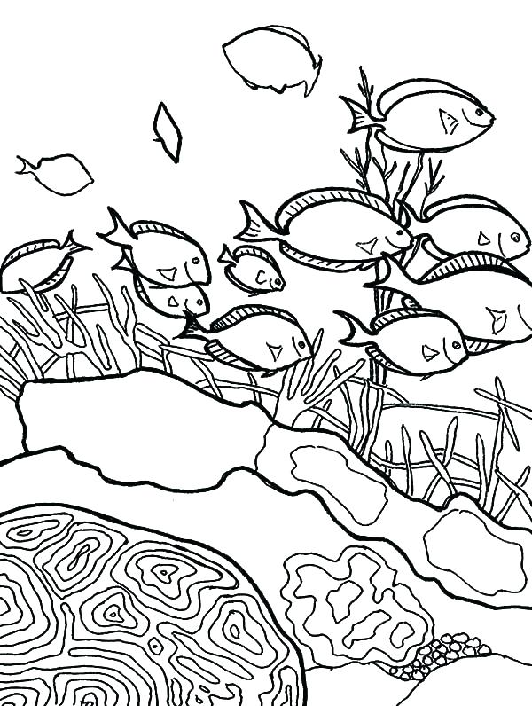 600x796 Coral Coloring Pages Coral Reef Coloring Sheet Coral Reef Coloring
