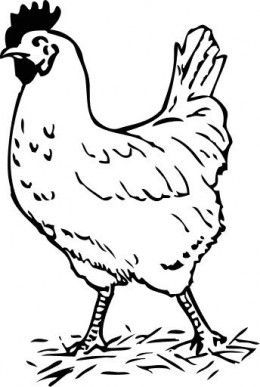 260x387 Free Chicken Coloring Pages Free Chickens, Free Printable