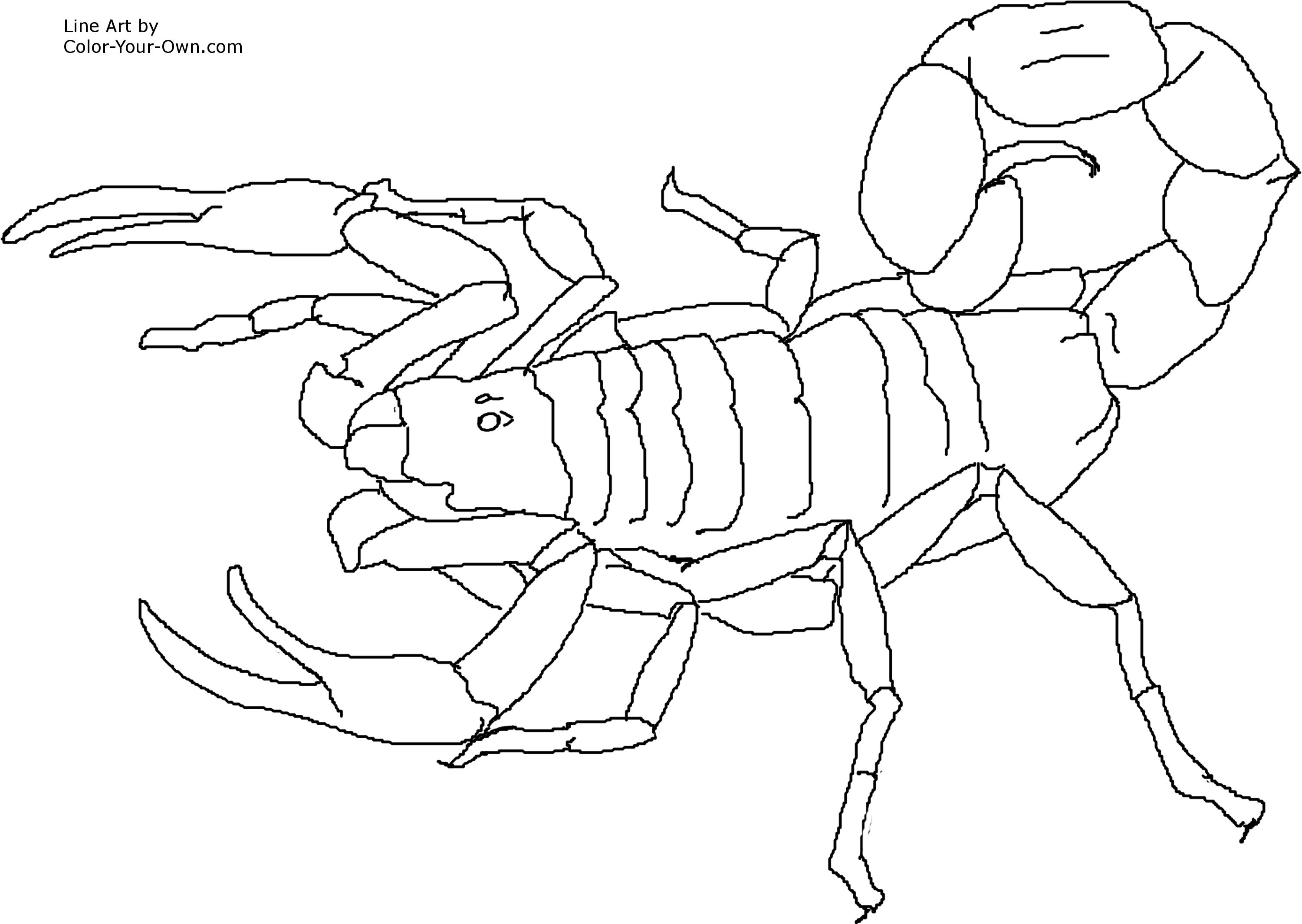 3000x2129 Scorpion Coloring Pages