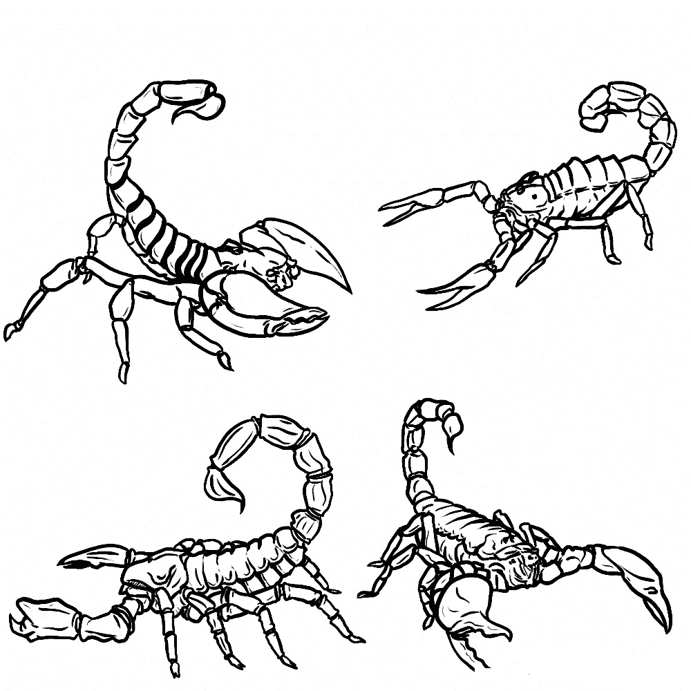 1000x1000 Scorpion Coloring Pages Printable Free Coloring Pages