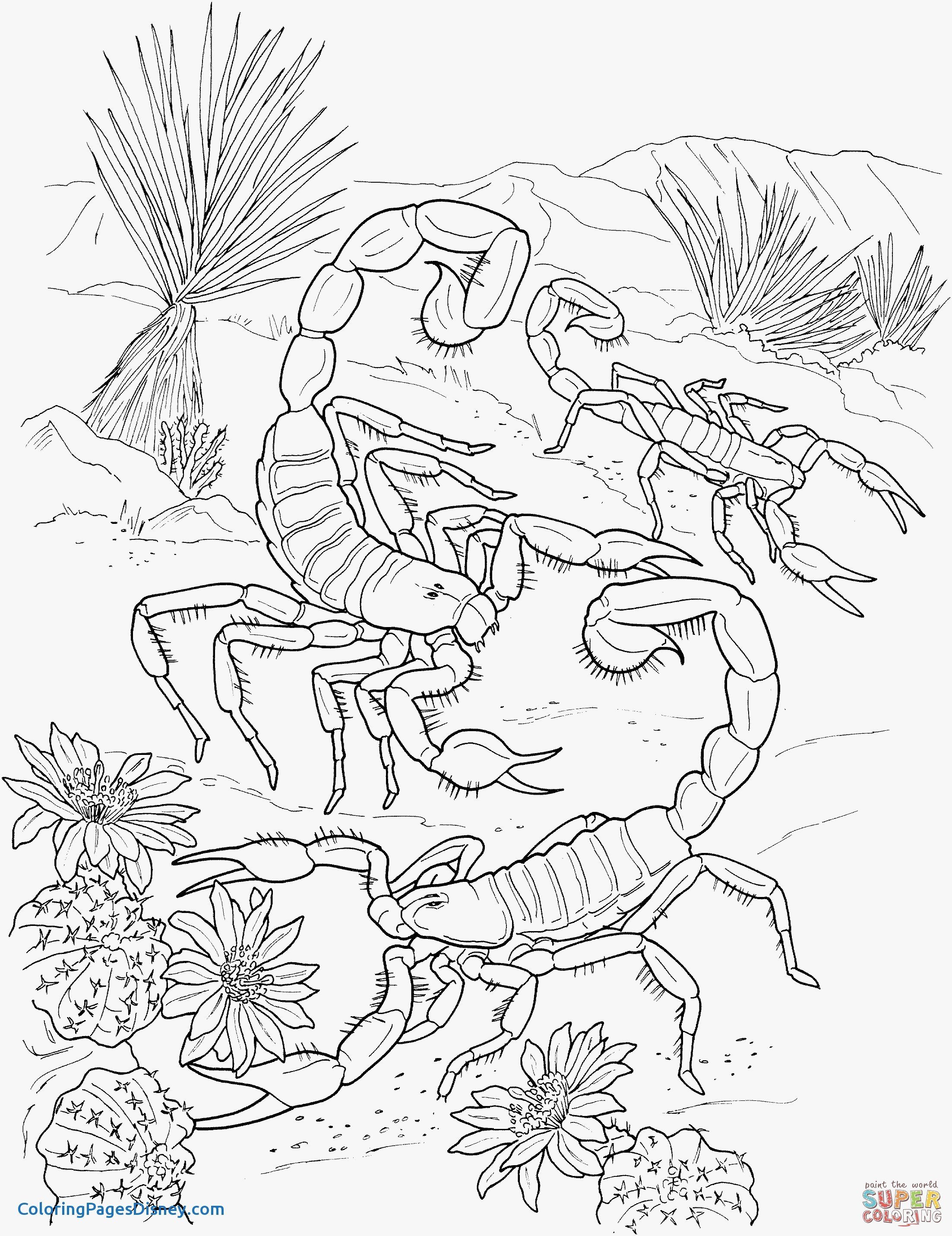 2205x2862 Scorpion Coloring Pages Elegant Desert Scorpions Coloring Page
