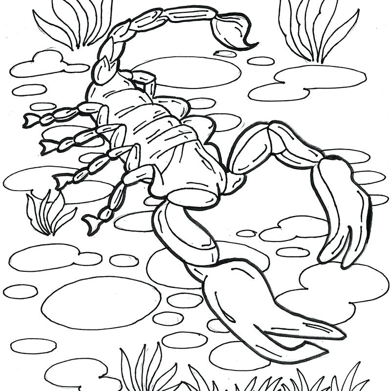 800x800 Scorpion Coloring Pages Scorpion Coloring Pages Mortal Kombat
